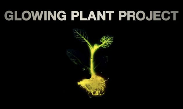 Glowing Plants – Natural Lighting With No Electricity