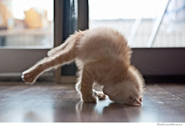 Cat Yoga Headstand