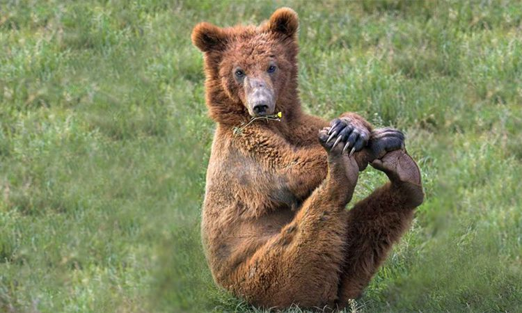 The Real Life 'Yogi Bear'