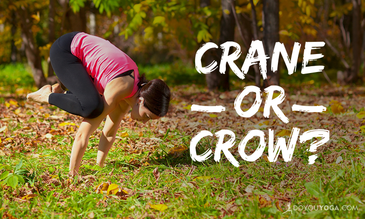 Crane Versus Crow - What's The Difference