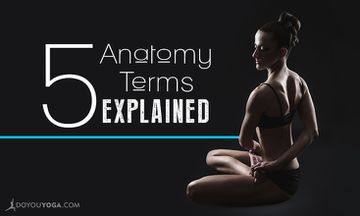 5 Anatomy Terms You Often Hear in Yoga Class