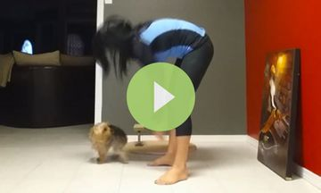 Woman Kicks Up Into Yoga Handstand, Sends Dog Flying (VIDEO)