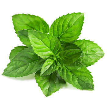 5 Herbs to Help You Beat the Summer Heat -mint