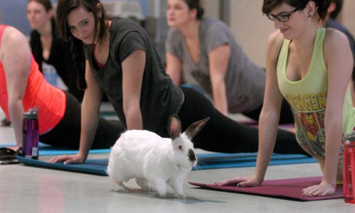 Vancouver Has 'Bunny Yoga' And It's For a Good Cause