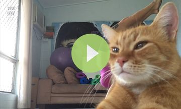 Yoga Cat Interrupts Selfie (VIDEO)