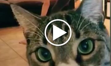 Funny Video of Cats Interrupting Yoga