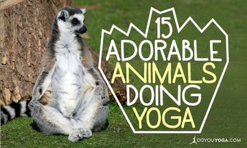 15 Adorable Animals Doing Yoga