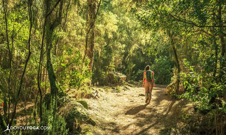 Get Into the Wild with Forest Bathing
