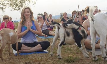 Bleat in, Bleat out: Goat Yoga is Real and It's Awesome